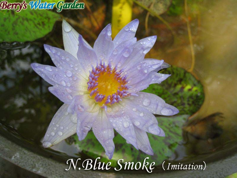 N.Blue Smoke(Imitation)