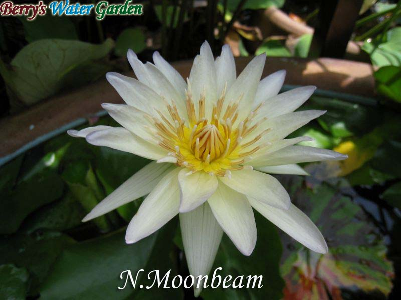 N.Moonbeam