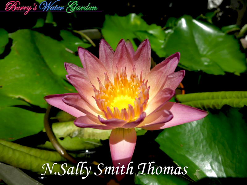 N.Sally Smith Thomas