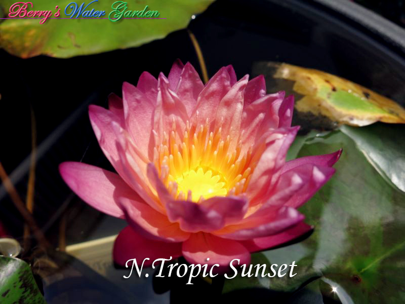 N.Tropic Sunset